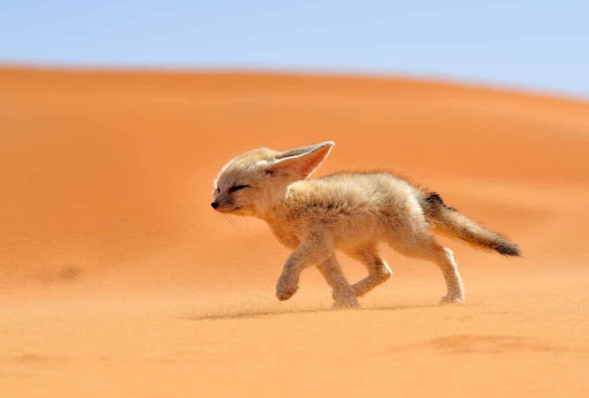 Douz porte du désert