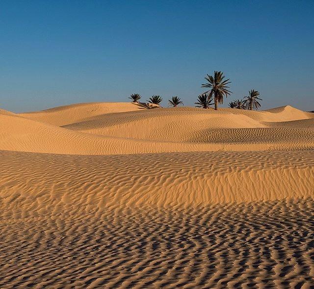 Douz Zaafrane sud Tunisie ville de beauté sauvage