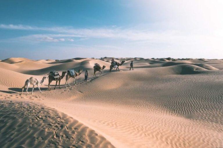 On vous organise des excursions, des circuits pour découvrir le grand sud tunisien. On vous dévoile le vrai visage de sud tunisien