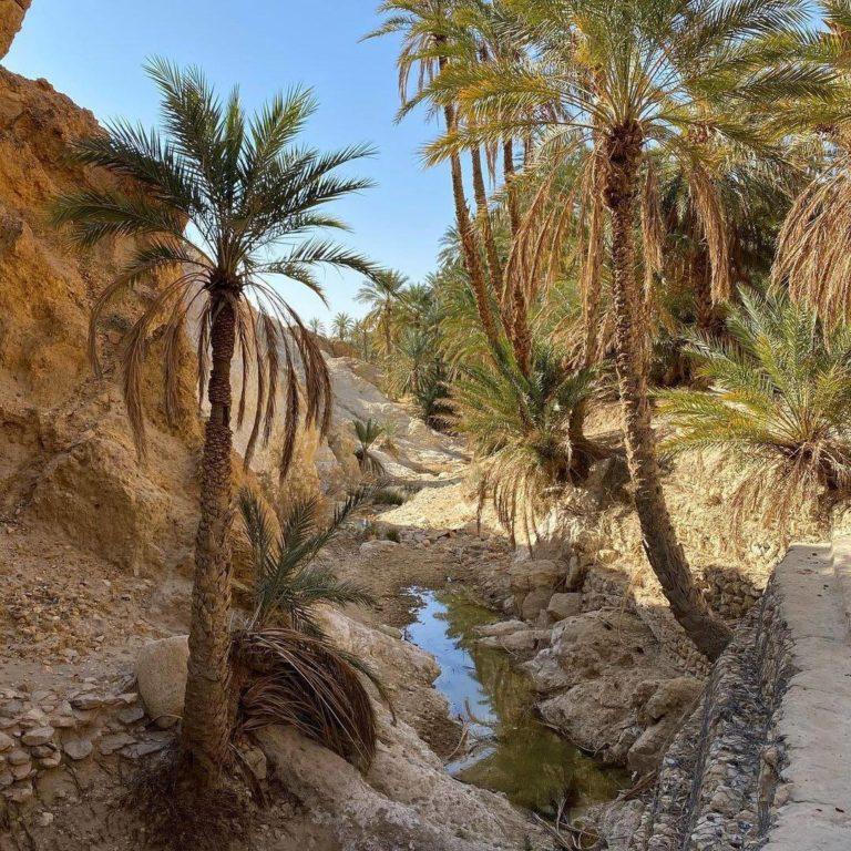Chebika oasis Tozeursud Tunisie miracle of nature